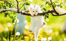 Забавный котенок висит на ветке цветущего дерева