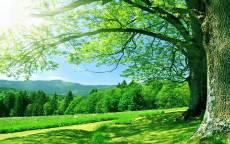 Изумрудная весенняя трава