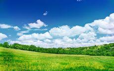 Весенний лес под голубым небом