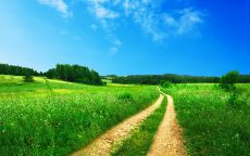 Дорога в зеленом поле