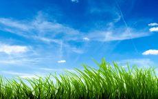 Голубое небо и зеленая трава