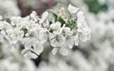 Ранняя весна, цветение, цветки, листья