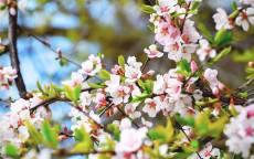 Ранняя весна, цветы, цветение, почки, молодые листья