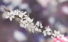 Весна, ветка, белые цветы, цветение
