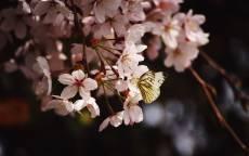 Бабочка на цветке, весна, цветение