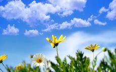 Весенние полевые цветы