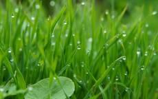 Утренняя роса на молодой траве