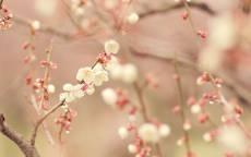 Нежные цветки на ветках весной