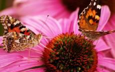 Цветок, лето, бабочки