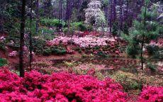 Яркие цветы в летнем лесу