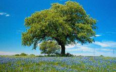 Деревья в поле