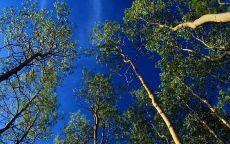 Синее небо в лесу