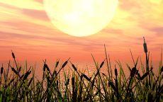 Камыши и солнце
