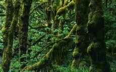 Мох в джунглях
