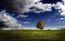 Одинокое дерево в поле