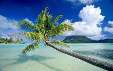 Пальма на побережье