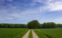 Дорога в зеленном поле