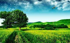Самолет над зеленым полем