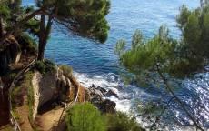море, сосны, скала, вода, крутой спуск