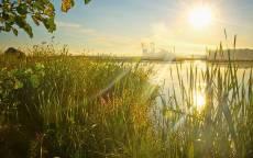 Лето, Озеро, Камыш, Солнце, Красивый восход солнца