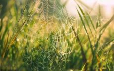 Лето, трава, паутина, паук, роса
