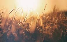 Солнце, лето, трава, тень