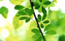 Ветка с молодыми листьями