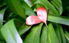 Сердечко из листьев