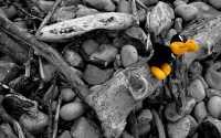 Черно-белая фотография игрушка на камнях.