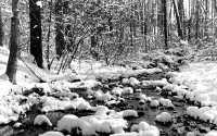 Черно-белая фотография зимний ручей.