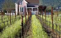 Виноградник Франция