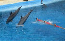 Дельфины и Синхронное плавание