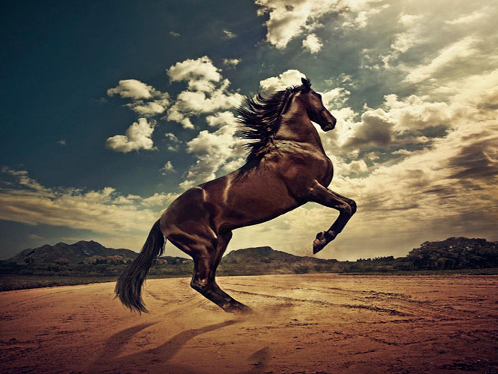 Обои поле, деревья, природа, поза, лошадь, забор, кони, весна ... | 1200x1600
