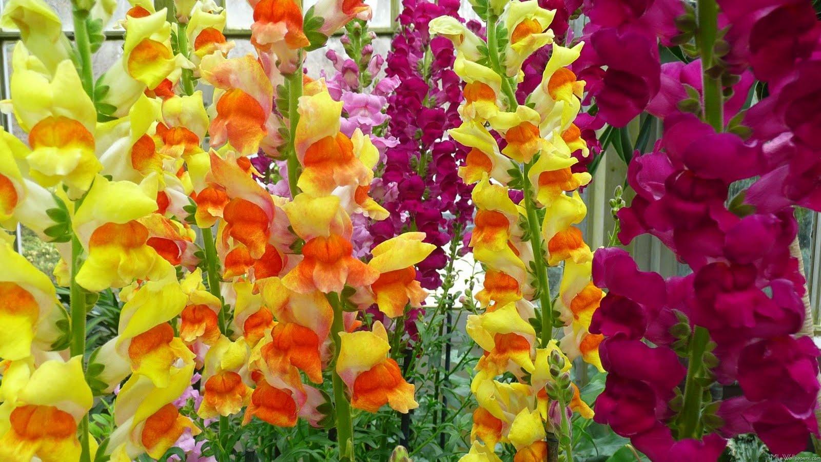 Красивые цветы на рабочий стол (15 обоев) » Обои для рабочего ...   900x1600