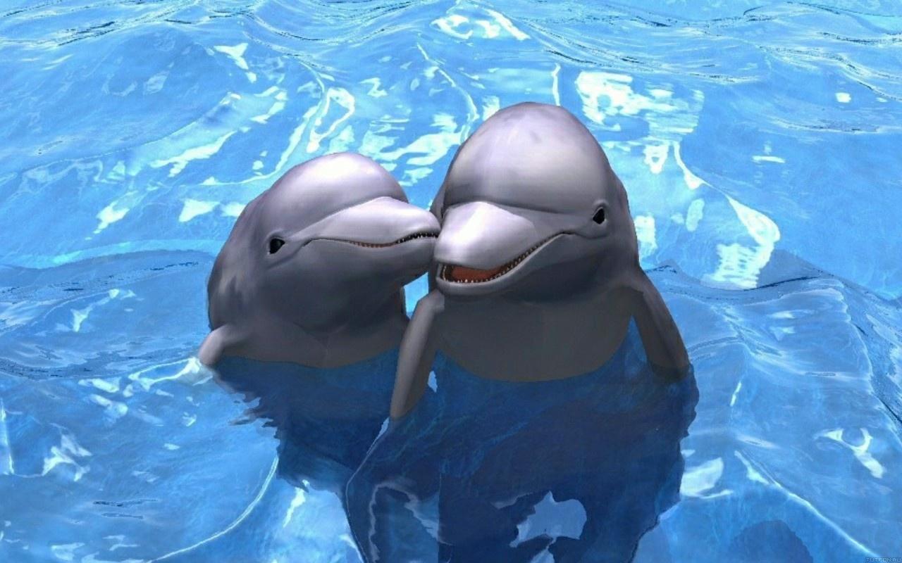 Дельфин любовь — стоковое фото © shapovalovea #69378855.