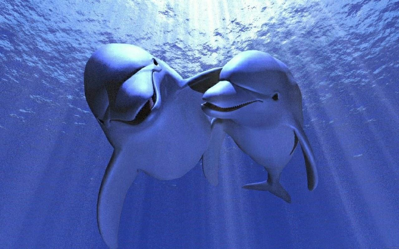 Дельфин дверь скачать.